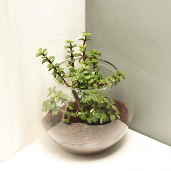 jade-terrarium-9978940pl-A