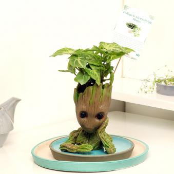 Groot Syngonium Plant